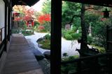 六道珍皇寺 紅葉の庭園