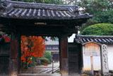 法界寺 山門越しの紅葉