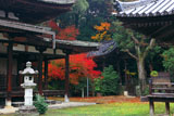 法界寺 阿弥陀堂と紅葉
