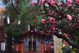 許波多神社 サザンカと本殿