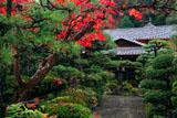 萬福寺 龍興院の紅葉