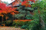 萬福寺 銀杏庵の紅葉