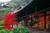 萬福寺 回廊の紅葉と開山