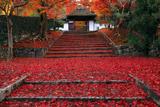 安楽寺 門前の敷き紅葉