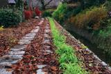 哲学の道 落葉の小径