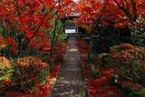 善法律寺 参道の散紅葉