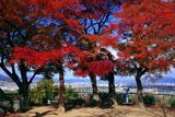 石清水八幡宮 紅葉の展望台