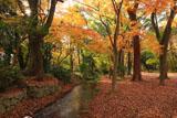 下鴨神社糺の森 瀬見の小川と雑木黄葉