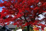上品蓮台寺 名残の紅葉