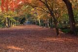 糺の森馬場の紅葉