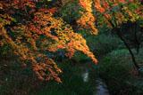 糺の森 紅葉と泉川