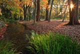 糺の森 瀬見の小川と紅葉