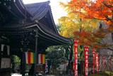 京都六角堂 本堂と冬紅葉