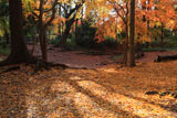 糺の森 新糺池跡の敷黄葉