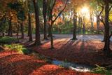 下鴨神社 夕照の糺の森
