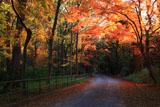 糺の森の冬紅葉