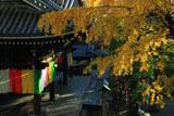六角堂 イチョウ黄葉と本堂