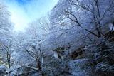 志明院 雪の花と宿坊