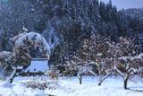 京都広河原 菅原町の雪中残柿