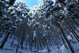 鞍馬 花脊峠の雪景色