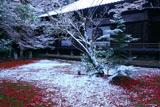 京都神光院 敷紅葉に淡雪