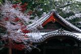 京都神光院 冬紅葉と中興堂