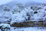 光悦寺 雪化粧の鷲ヶ峰