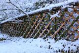 雪化粧の光悦寺垣