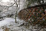 光悦寺 雪の花と光悦垣