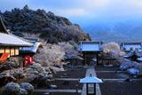 妙満寺 雪の花咲く境内