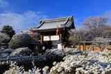 妙満寺 雪化粧の山門