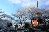 三明院 雪の花と多宝塔