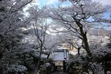 三明院 雪の花と山門