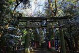 崇道神社 雪化粧の参道