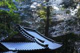 崇道神社 雪化粧の社務所