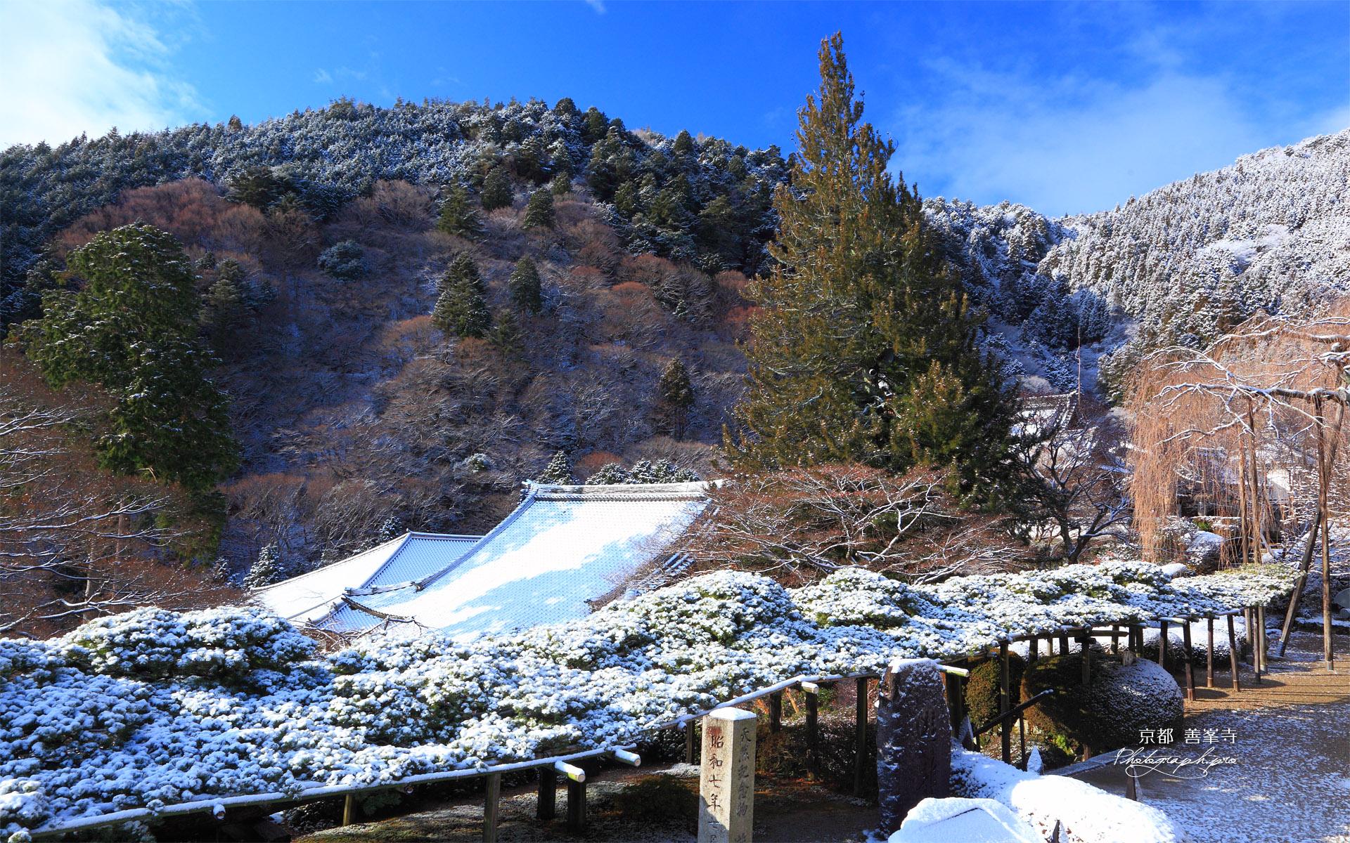 善峯寺 雪化粧の遊龍の松