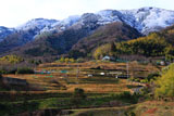京都大原野 冠雪の西山と棚田