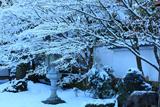 栗棘庵 雪の花と濡鷺型灯籠