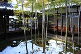 妙顕寺 斑雪の坪庭