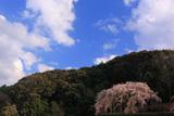 奥山田のしだれ桜