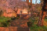 興徳寺のしだれ桜