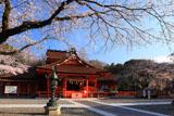 浅間大社の信玄桜