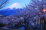 浅間大社の桜 残照の富士山