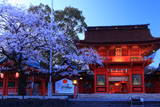 浅間大社の桜 宵の楼門