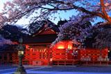 浅間大社の桜 宵の拝殿
