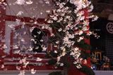 大光寺のエドヒガンザクラ