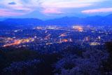 弘法山公園の桜 秦野市街と富士山