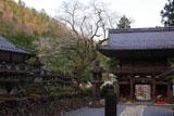 甘南美寺のサクラ