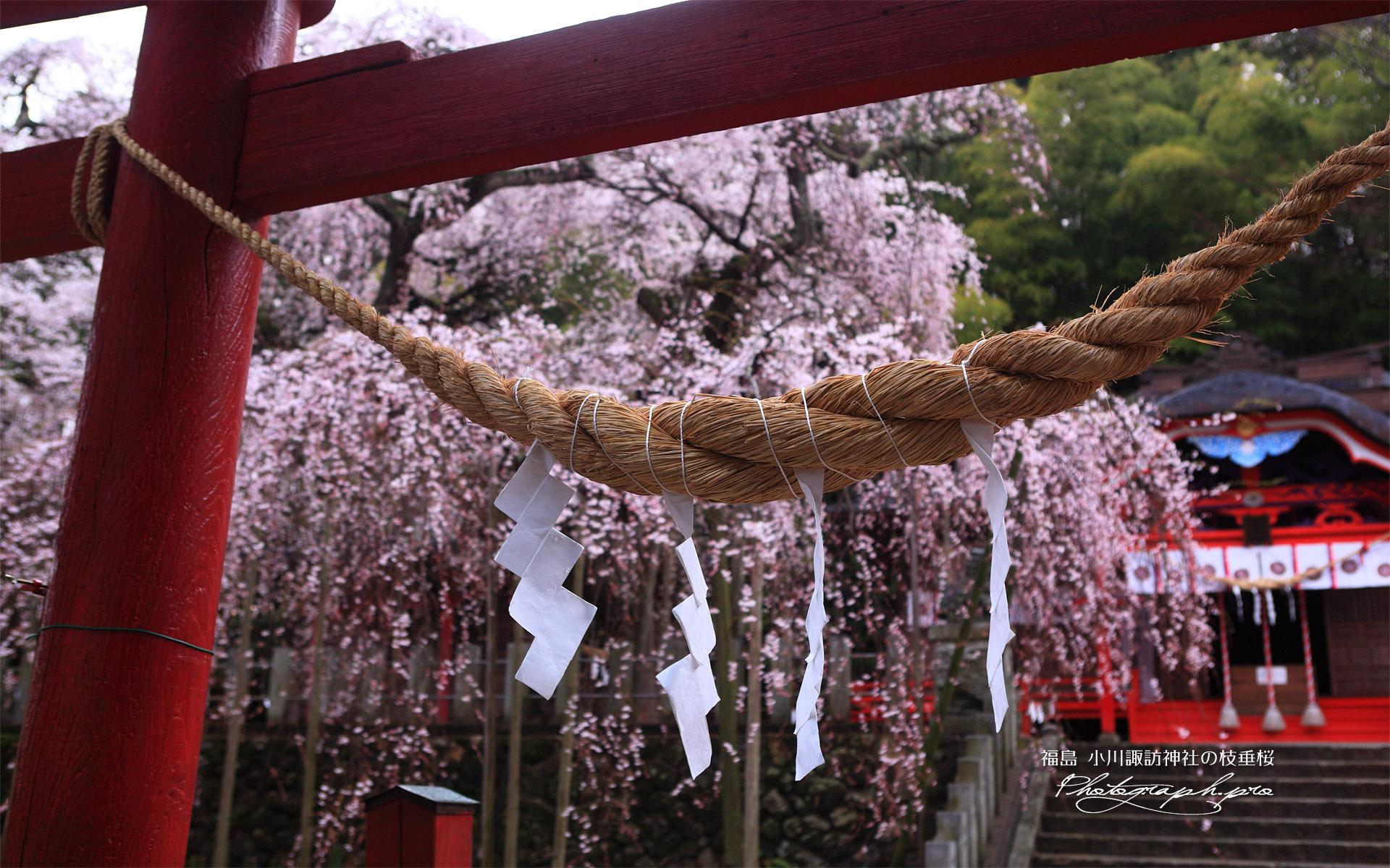 小川諏訪神社のしだれ桜