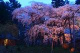 生瀬地蔵桜